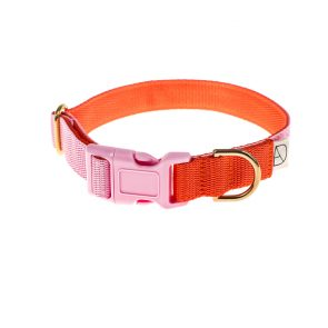 doggie apparel baby pink & orange dog collar