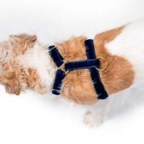 'tivoli' navy velvet harness