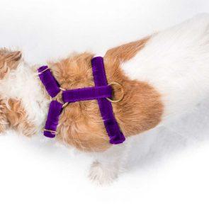 'all saints' purple velvet harness